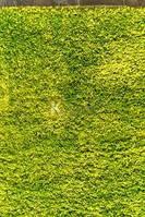 Ковры Fantasy зеленый 1.33х1.90