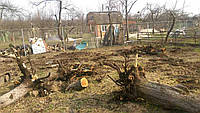 Удаление, корчевка деревьев и пней