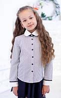 Школьная блузочка в синий горошек 5007 длинный рукав
