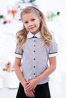 Школьная блузочка в синий горошек 5007 короткий рукав