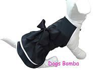Платье O-23 для собак DogsBomba