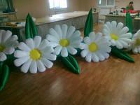 """Пневмоцветы для вашего торжества  """"ромашки"""" 7м (ВИДЕО)"""