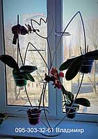 "Подставка для цветов ""Тюльпан"" на 14 колец для орхидей"