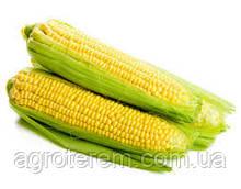 Кукуруза Экселент 2500 сем.  до 10.2016 года