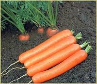 Насіння моркви ДордоньF1 (нанський тип)