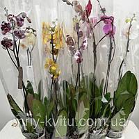 Вазон Орхидея1 12/65, фото 1