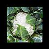 Семена Капуста цветная Каспер F1 поштучно 20 семян Rijk Zwaan