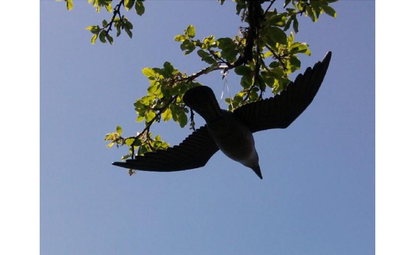 Муляж Ворон в полете — Защита от голубей