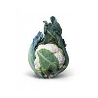 Насіння Капуста цвітна Мисора F1, 1000 насіння Kitano Seed