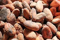 Какао бобы сырые Эквадор