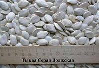 Тыквенная семечка сероволжская (Семена тыквы)