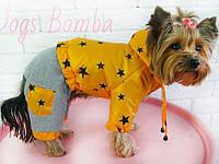Комбинезон-трансформер Звезды для собак DogsBomba