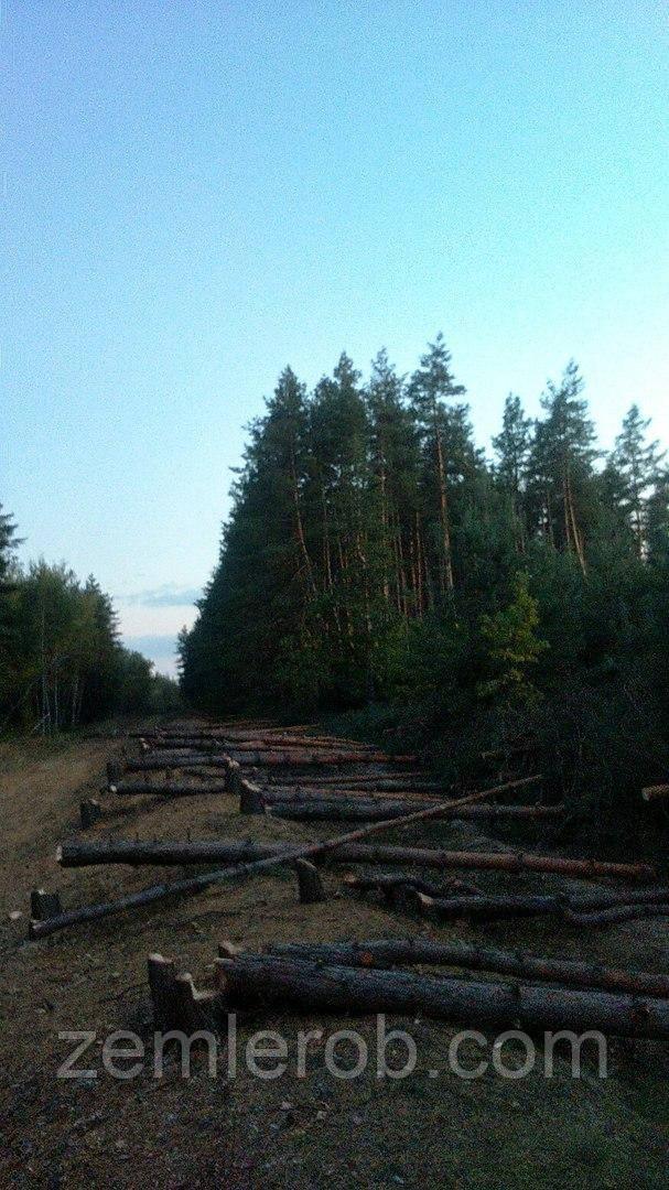 Валка леса, санитарная чистка лесополос