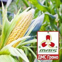 Семена кукурузы ДМС Гроно МАИС