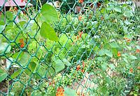 Заборна решітка пластикова зелена (1,9м * 25м, комірка 5*5 см) / Заборная сетка пластиковая.