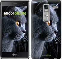 """Чехол на LG Zero Красивый кот """"3038u-476"""""""