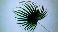 Пластиковый лист пальмы