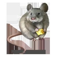 Щури, миші
