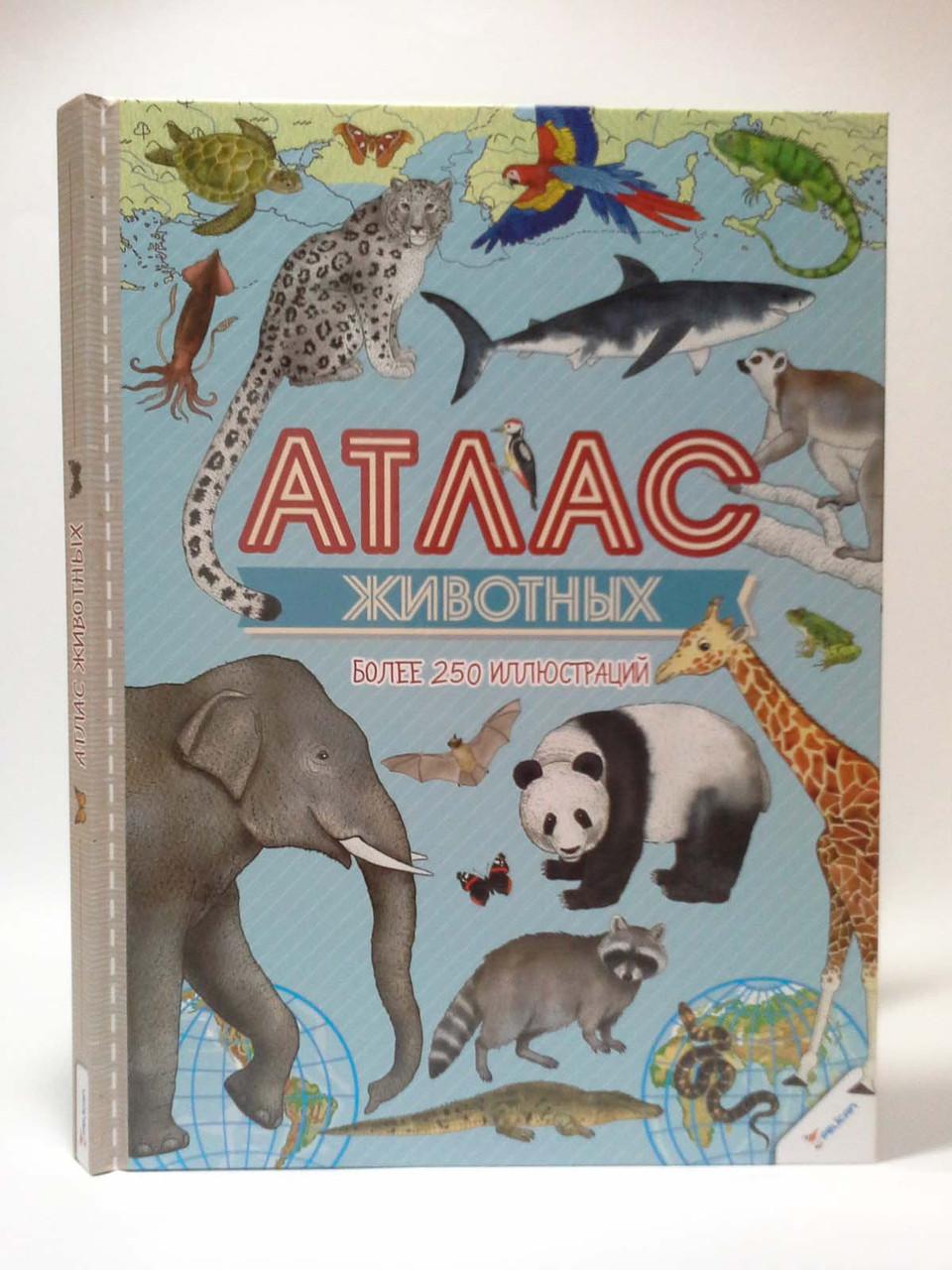 Пелікан Великий ілюстрований Атлас тварин Тумко