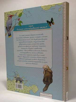Пелікан Великий ілюстрований Атлас тварин Тумко, фото 2