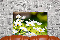 """Картина на холсте """"Ромашки. Цветы. Природа"""". 60х40 см."""