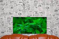 "Картина на холсте ""Мята. Зелень. Природа"".  60х30 см."