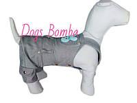 Комбинезон Джинсовый серый для собак DogsBomba