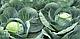 Семена капусты Центурион F1 \ Centurion F1 2500 семян Clause , фото 3