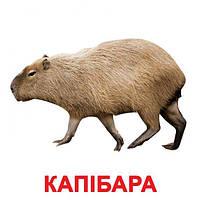 """Карточки большие украинские с фактами """"Екзотичні тварини"""" 20 карт., методика Глена Домана, в пак. 16,5*19,5см,"""