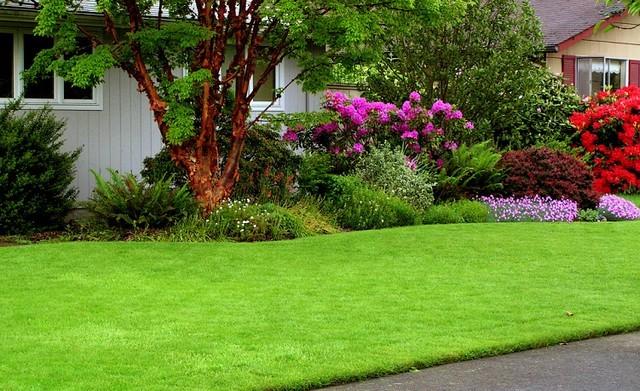 Как правильно организовать посадку газонной травы.