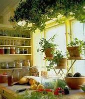Превращение кухни в оранжерею (интересные статьи)