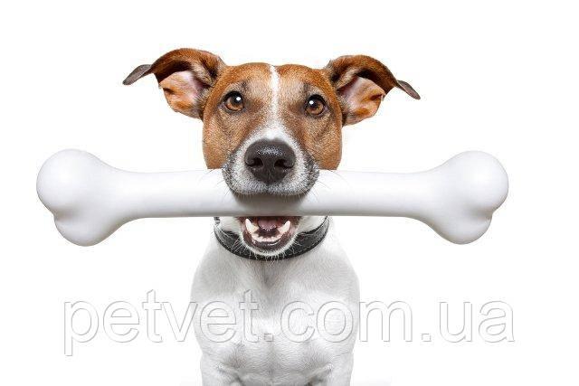 Зачем взрослой собаке нужны добавки с кальцием?