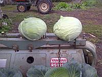 Семена Капуста Бригадир F1 \ Brigadir F1 10000 семян Clause