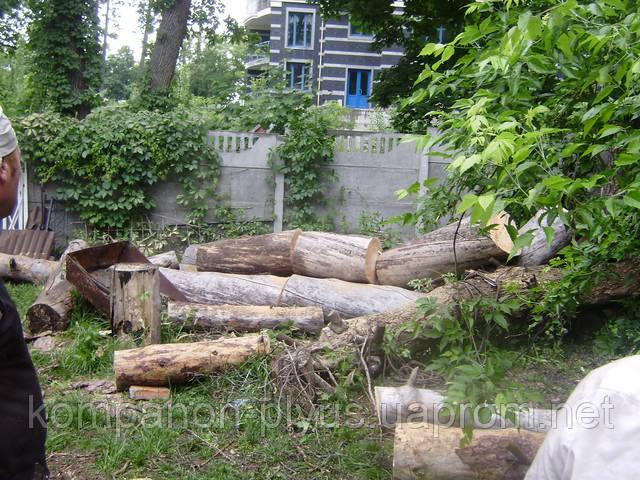 дрова колотые киев  дрова дубовые киев дрова купить киев  дрова киев цена дрова доставка киев  дрова фруктовые киев купить дрова киев цена таежная свеча доставка дров дрова березовые