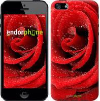 "Чехол на iPhone SE Красная роза ""529c-214"""