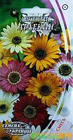 """Семена цветов Арктотис """"Арлекин"""", однолетнее, 0,2 г,  """"Семена Украины"""", Украина."""