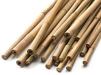 Бамбукова опора із натурального бамбука для квітів.(60 см). / Бамбуковая опора из натурального бамбука (60см).