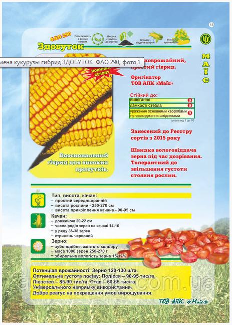Семена кукурузы Здобуток ФАО 290 (Черкасы)