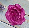 Головка розы Д.Остина(английская) фиолетовая