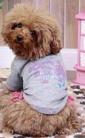 Футболка для собак Добаз, Dobaz Baby серый L
