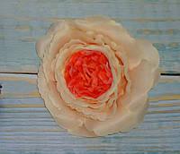 Головка розы Д.Остина(английская) кремовая с оранжевой серединкой