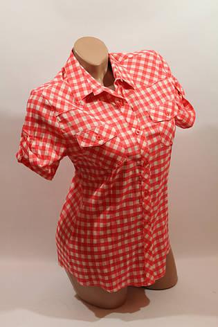 Женская рубашка в клетку с коротким рукавом Cat., ML, фото 2