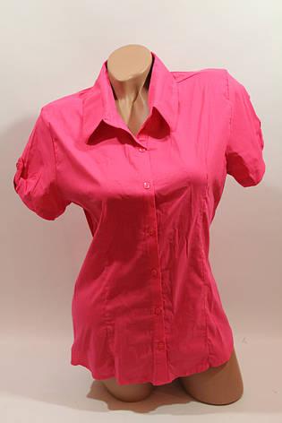 Женская рубашка однотонная с коротким рукавом Cat., ML, фото 2