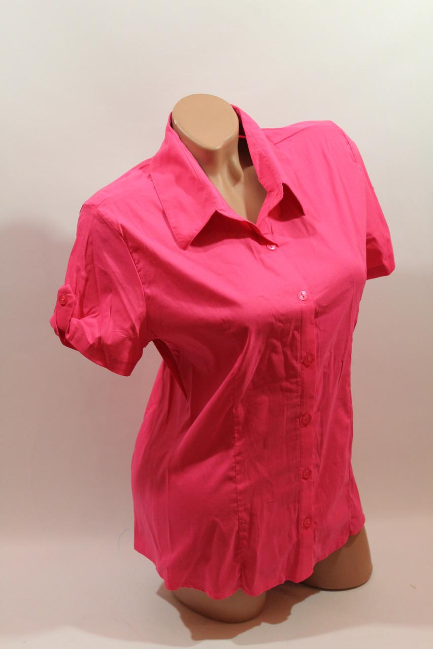 Женская рубашка однотонная с коротким рукавом Cat., ML