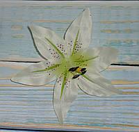 Головка лилии белой с салатовым