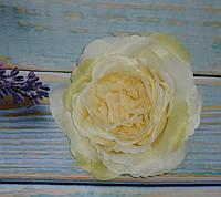Головка розы Д.Остина(английская) кремовая, фото 1