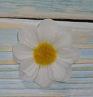 Головка цветка ромашки белой