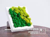 """""""Grain Nature"""" настольная композиция из стабилизированного мха от компании  """"Artis Green"""""""