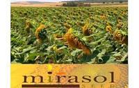 Семена подсолнечника Hipersol (Гиперсол)