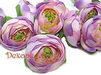 Ранункулюс фиолетовый